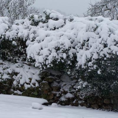 Le jardin de Tom Patate sous la neige