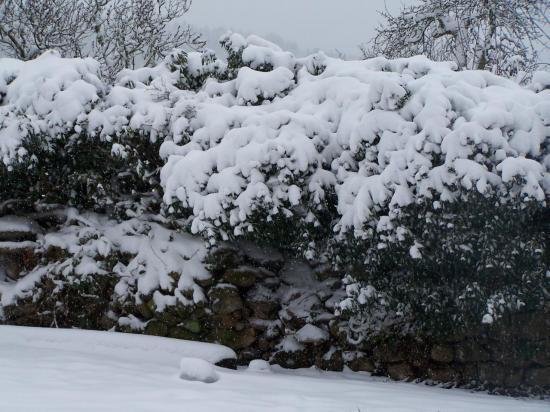 La cabane sous le lierre... sous la neige !