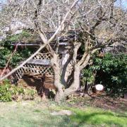 La cabane à outils de Mistigrise
